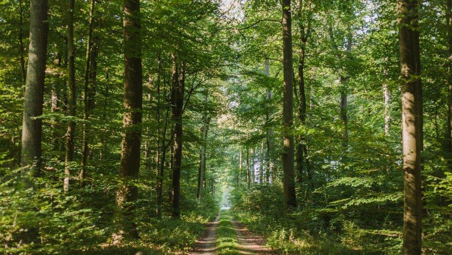Hauptweg | Quelle: FriedWald Ostheide