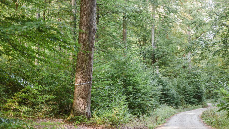 Hauptweg | Quelle: FriedWald Südharz