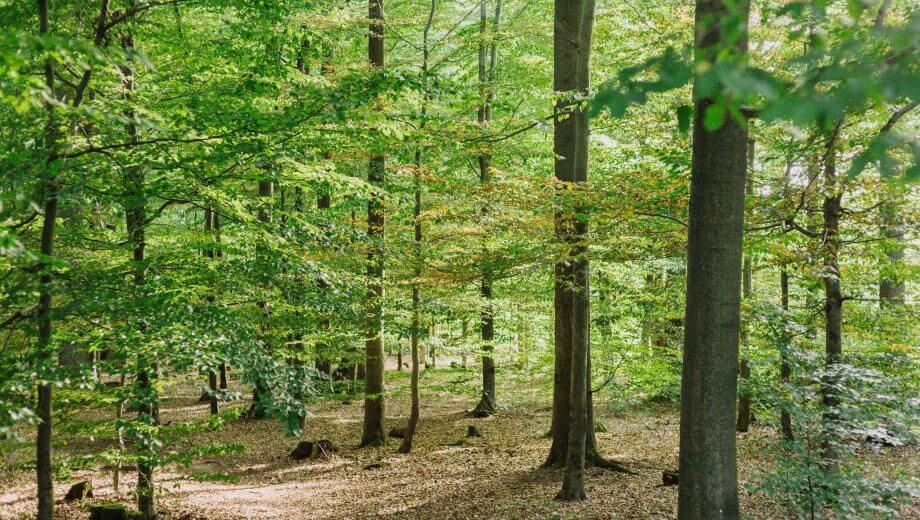 Waldbild | Quelle: FriedWald Südharz
