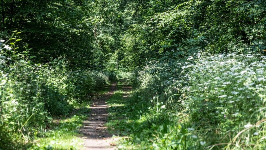 Waldweg | Quelle: FriedWald Uetzer Herrschaft