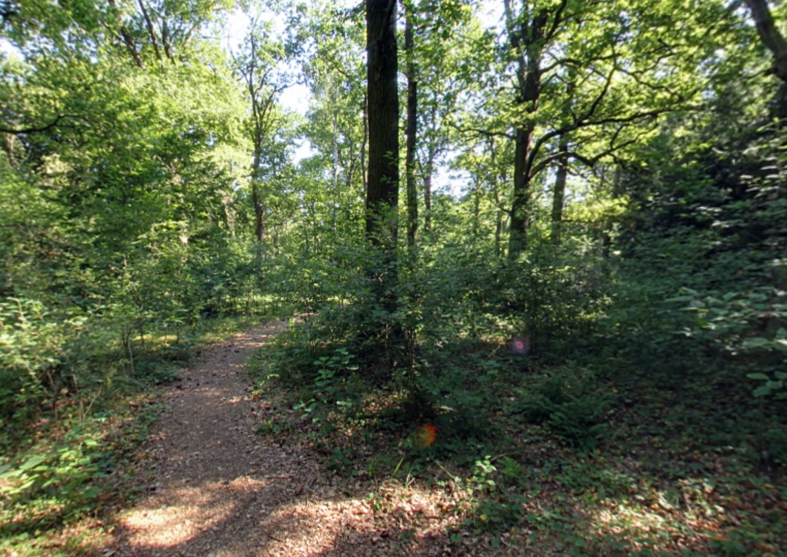 Waldweg   Quelle: RuheForst Nauen