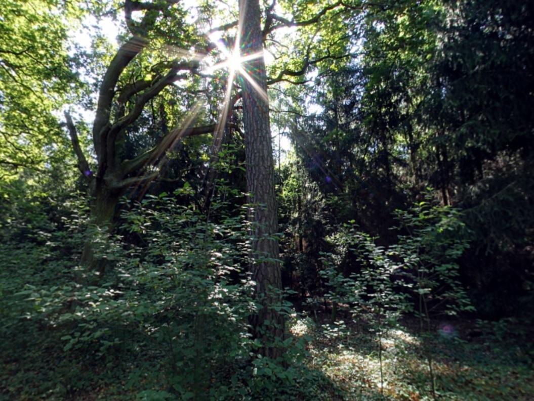 Tröstliche Waldstimmung   Quelle: RuheForst Nauen
