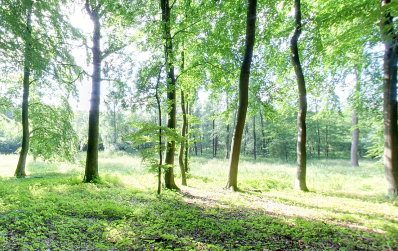 Waldrand | Quelle: Ruheforst Bothkamp an der Eiderquelle