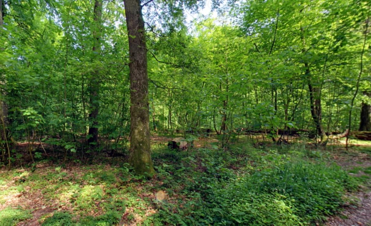 Waldbild | Quelle: RuheForst Glücksburg