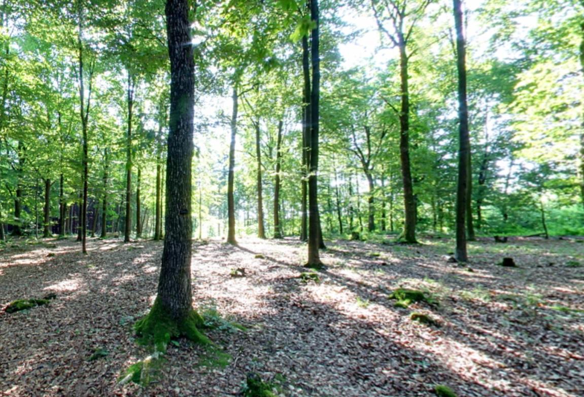 Waldstimmung | Quelle: RuheForst Hilchenbach