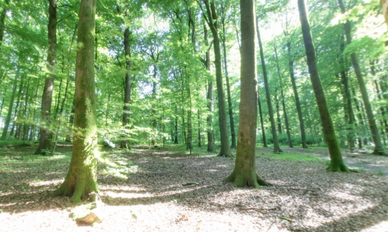 Bäume | Quelle: RuheForst Jagsthausen