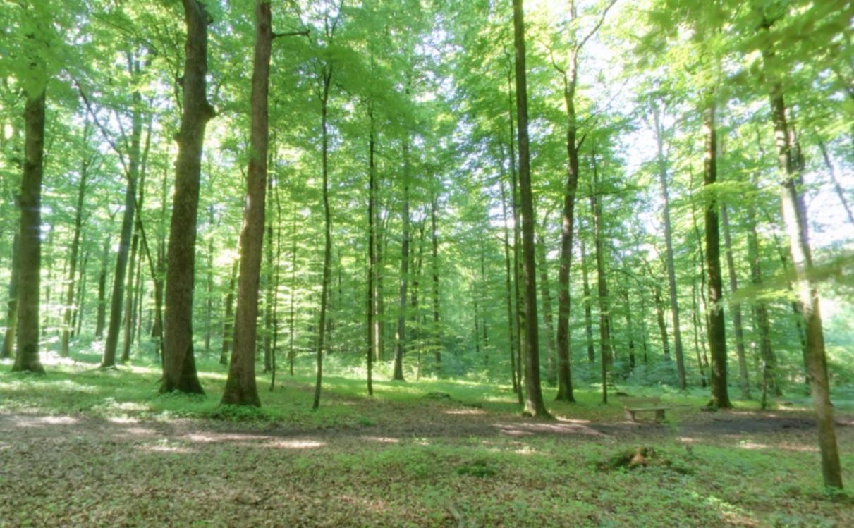 Waldweg | Quelle: RuheForst Jagsthausen