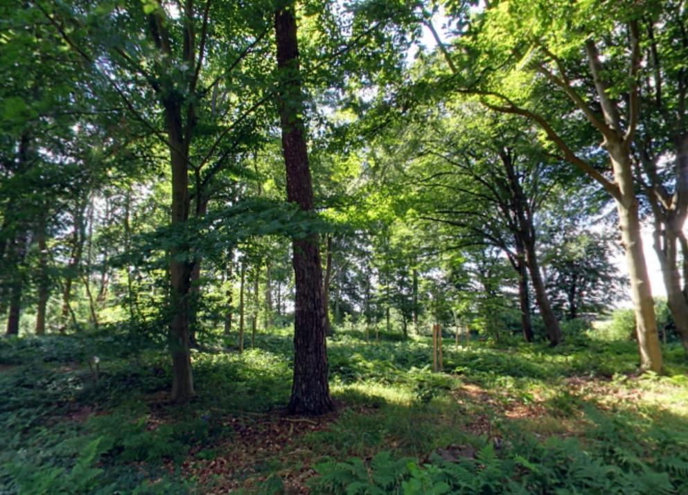 Waldbild | Quelle: RuheForst Klosterhof Grabhorn