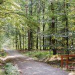 FriedWald Planitzwald, Holzbrücke | Quelle: FriedWald GmbH
