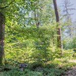FriedWald Wildenburger Land, Waldbild | Quelle: FriedWald GmbH