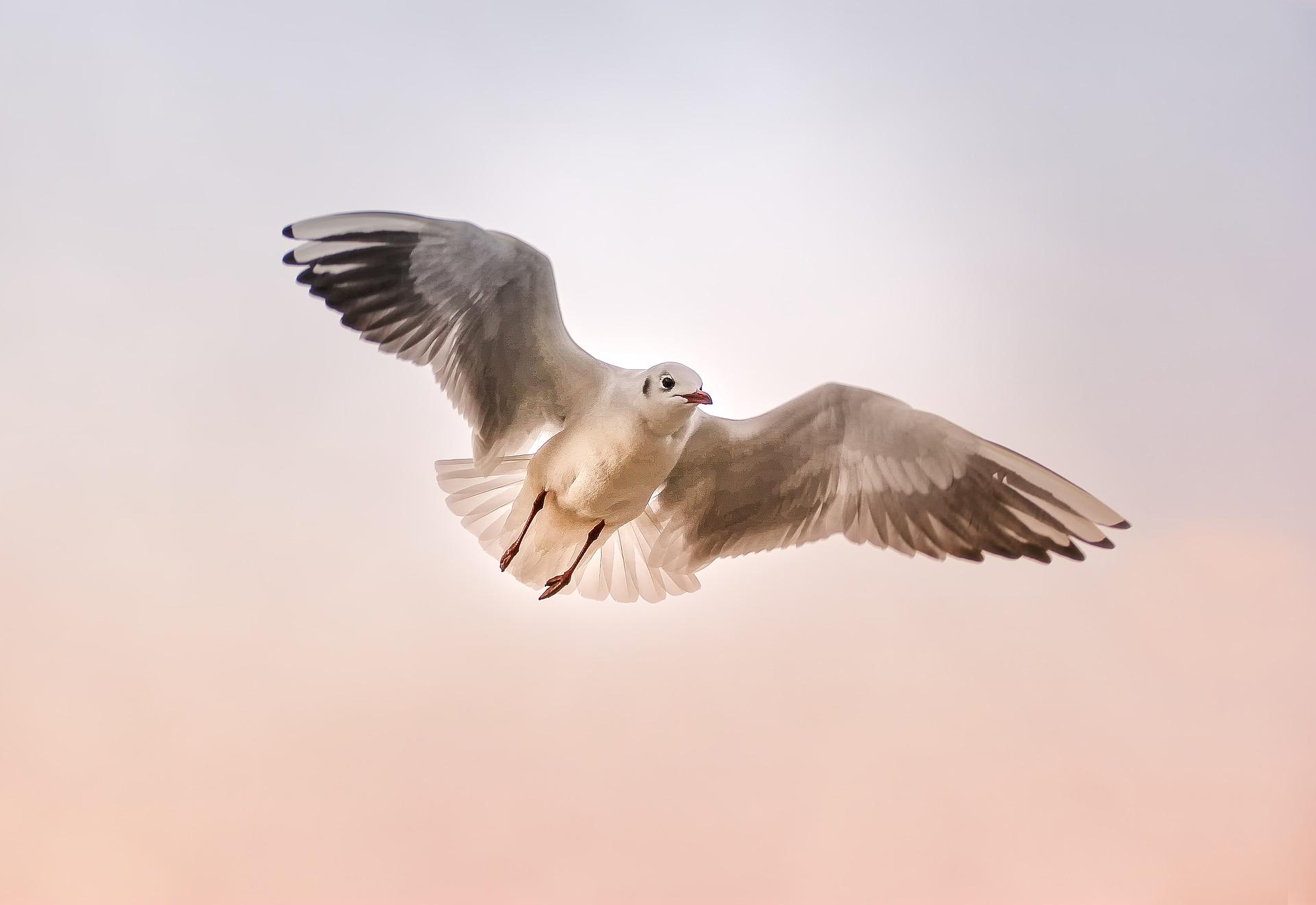 Seebestattung auf der Ostsee: Möwe am Himmel